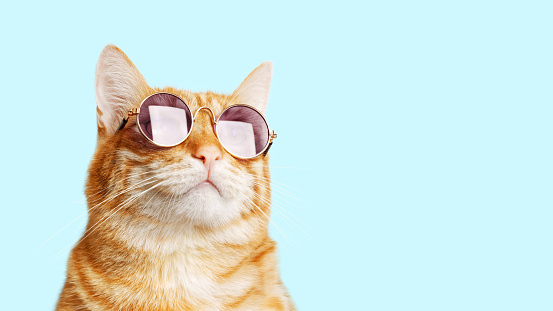 Closeup portrait of funny ginger cat wearing sunglasses isolated on light cyan. Copyspace. 1188445864