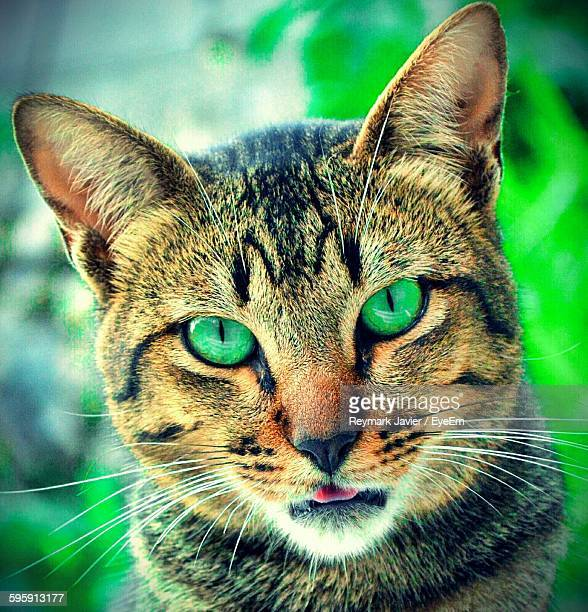 Close-Up Portrait Of Green Eyes Cat