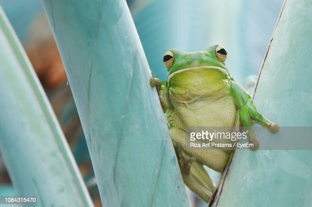 Close-Up Portrait Of Green Frog On Plants