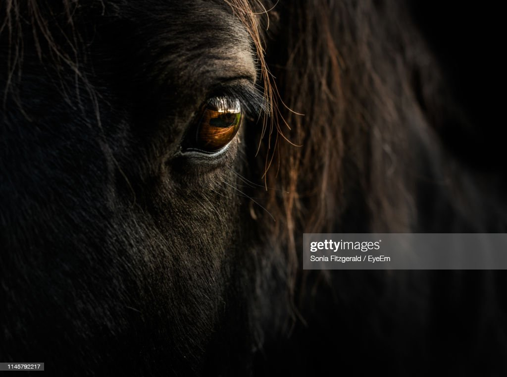 Close-Up Portrait Of Horse : Stock Photo