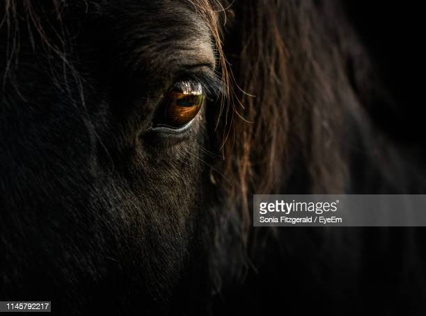 close-up portrait of horse - horse stock pictures, royalty-free photos & images
