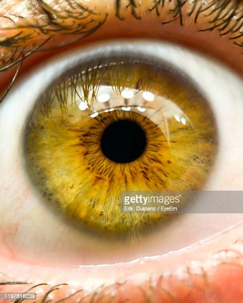 close-up portrait of human eye - green eyes stock pictures, royalty-free photos & images