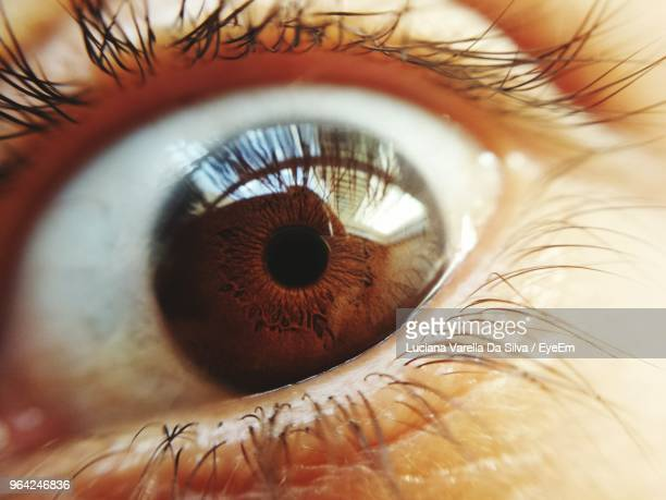close-up portrait of human eye - iris da silva stock pictures, royalty-free photos & images