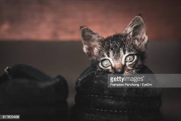 Close-Up Portrait Of Kitten In Shoe