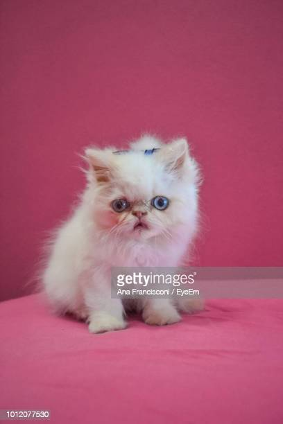Close-Up Portrait Of Kitten On Bed Against Pink Background