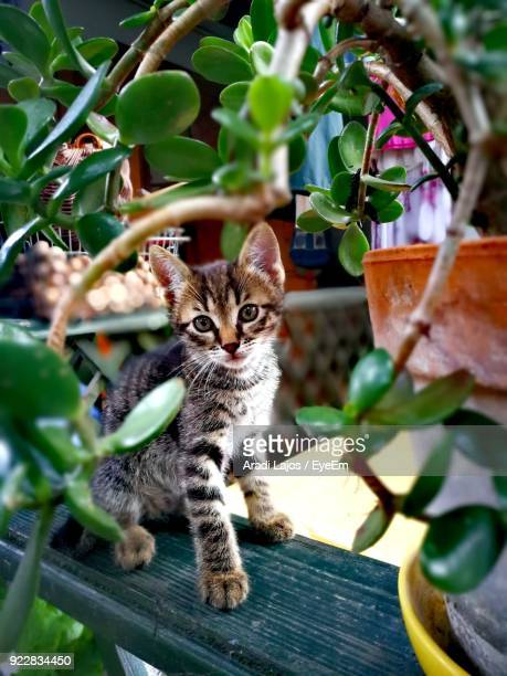 Close-Up Portrait Of Kitten Seen Through Leaves On Railing