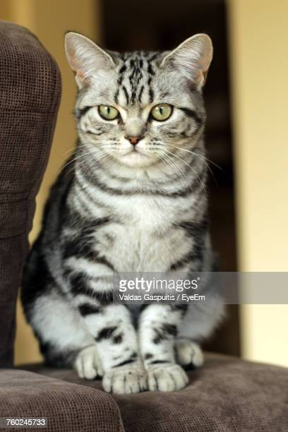 close-up portrait of kitten sitting on sofa at home - cat family stock photos and pictures