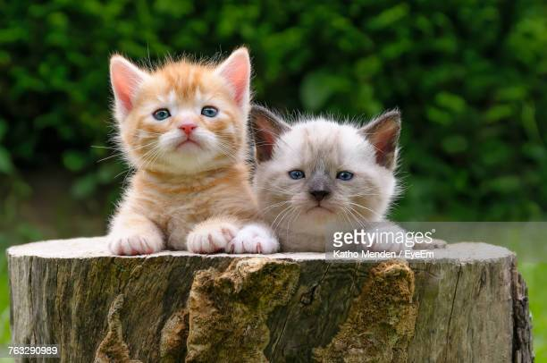 Close-Up Portrait Of Kittens