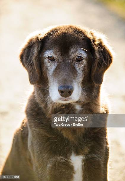 Close-Up Portrait Of Mixed-Breed Dog