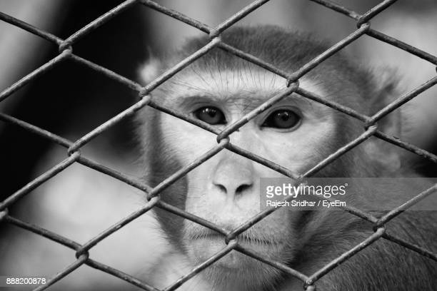 Close-Up Portrait Of Monkey In Cage