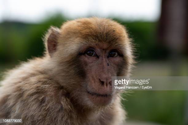 Close-Up Portrait Of Monkey Sitting Outdoors