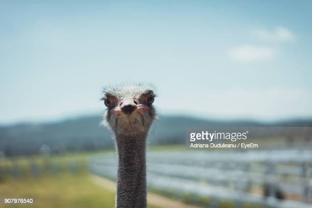 close-up portrait of ostrich against sky - adriana duduleanu stock photos and pictures