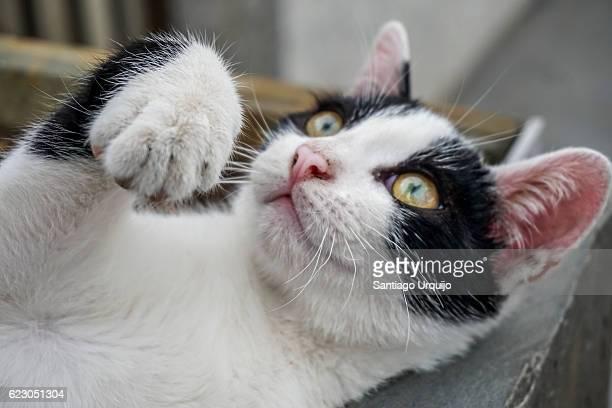 Close-up portrait of playful cat
