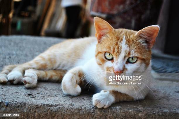 Close-Up Portrait Of Stray Cat Resting On Footpath