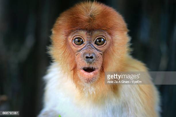 close-up portrait of surprised monkey - primate stock pictures, royalty-free photos & images