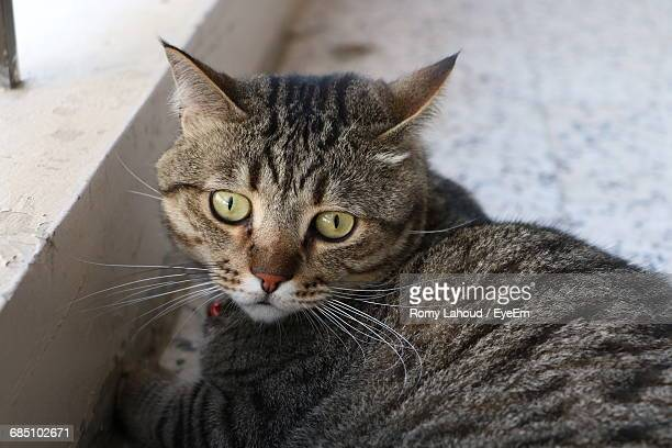 Close-Up Portrait Of Tabby Cat Sitting At Balcony