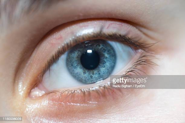 close-up portrait of woman eye - grey eyes stock pictures, royalty-free photos & images