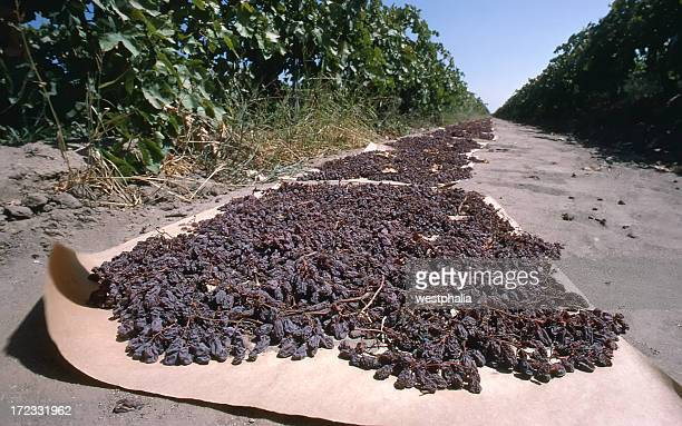Close-up Raisins Drying