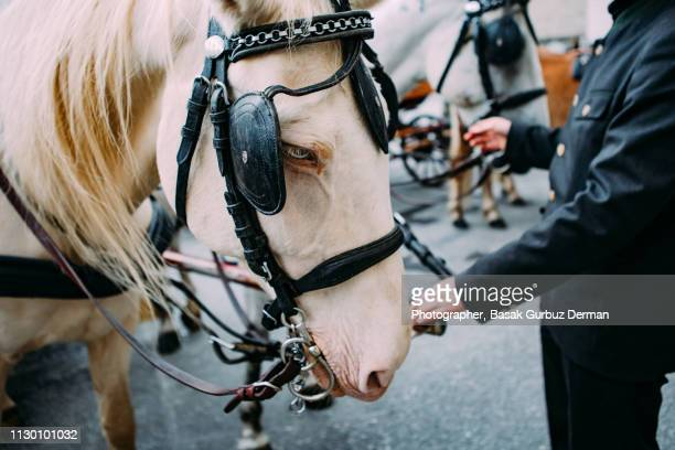 a close-up shot of a beautiful horse - animal powered vehicle stock photos and pictures