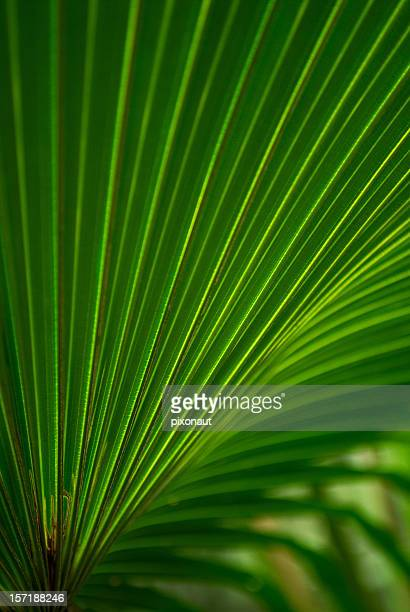 Closeup shot of a green, crisp palm leaf