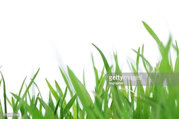 Vert herbe fraîche