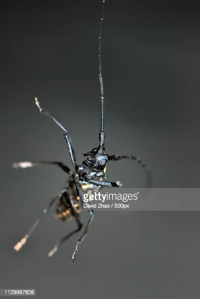 a close-up shot of long-horned beetle at night - horned beetle stock pictures, royalty-free photos & images