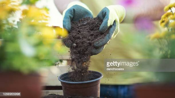 closeup shot of male hands working with flowers in greenhouse - potting stock pictures, royalty-free photos & images