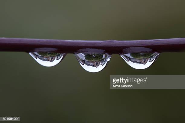 close-up shot of rain drops on a tree branch - alma danison stock photos and pictures