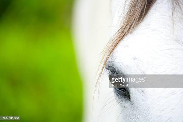 closeup shot of white horse eye at ranch - cheval blanc photos et images de collection