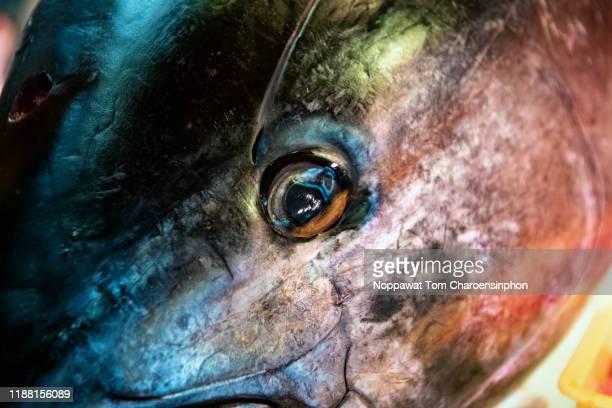 close-up shot tuna head, osaka, japan - poissons exotiques photos et images de collection