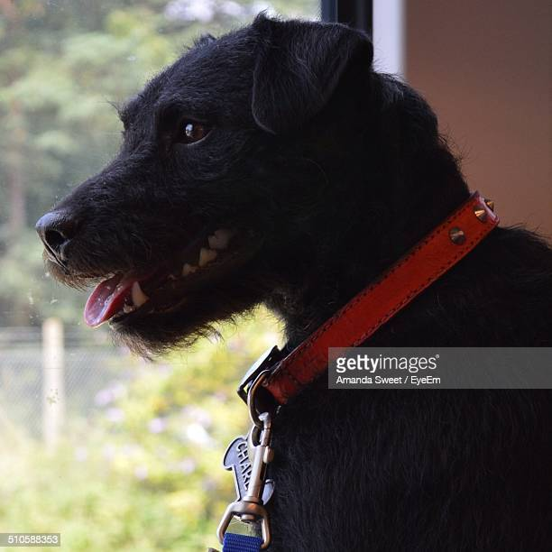 close-up side view of a dog looking away - amanda and amanda stock pictures, royalty-free photos & images