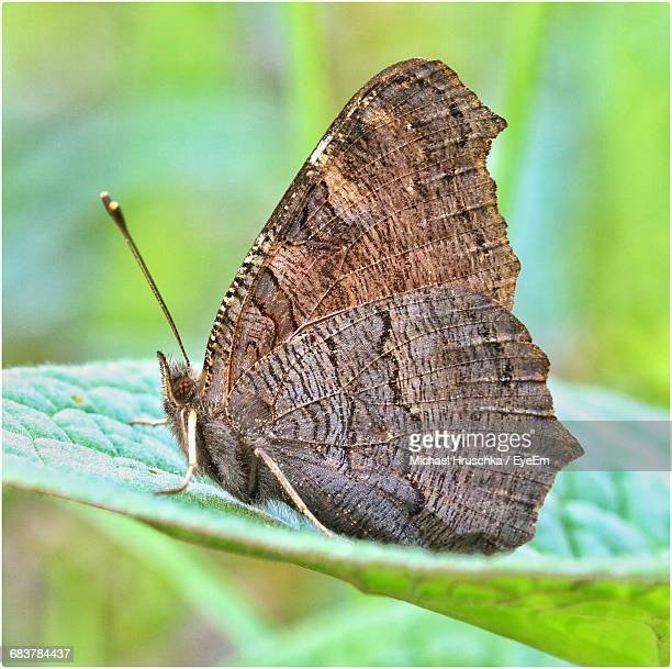 close-up side view of butterfly on leaf - michael hruschka stock-fotos und bilder