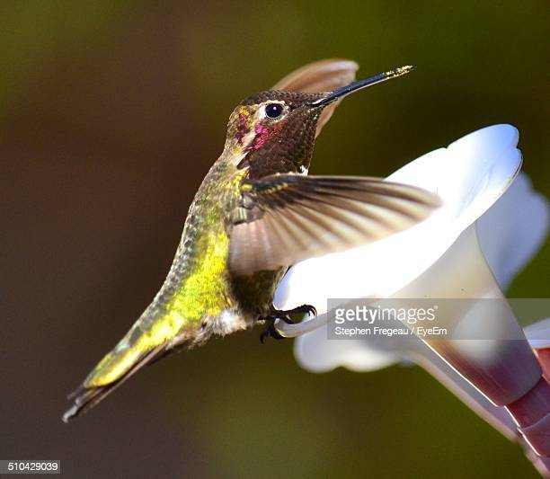 Close-up side view of humming bird