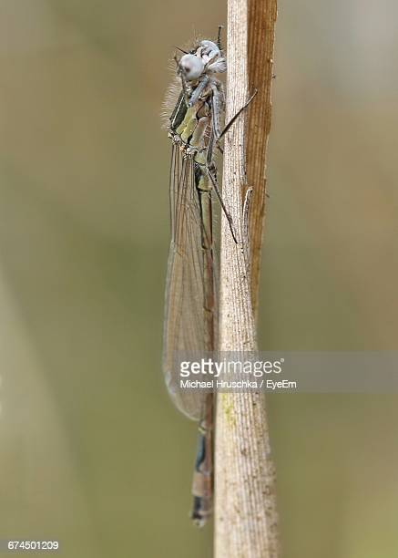 close-up side view of insect on stem against blurred background - michael hruschka stock-fotos und bilder