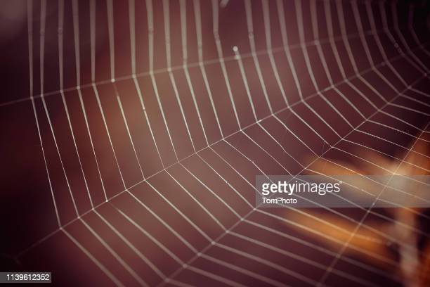 closeup spider web in summer forest - spider silk stock photos and pictures
