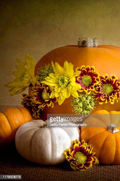 close-up, still-life autumn arrangement/decoration with an orange pumpkin, gourds and vibrant autumn flowers - pumpkin harvest stock pictures, royalty-free photos & images