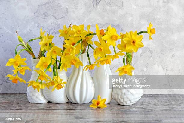 close-up, still-life image of beautiful spring, yellow daffodils arranged in white porcelain vases - bunch of flowers stock pictures, royalty-free photos & images