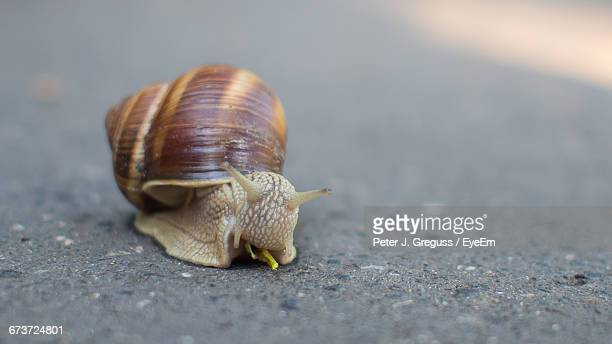 Close-Up Surface Level Of Snail On Ground