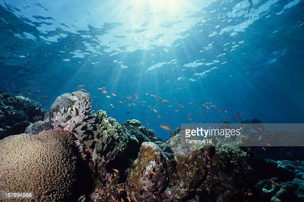 close-up underwater shot of a colorful reef - reef stock pictures, royalty-free photos & images