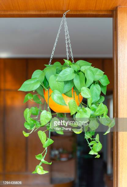 close-up view of a hanging potted plant in the living room - changzhou stock pictures, royalty-free photos & images