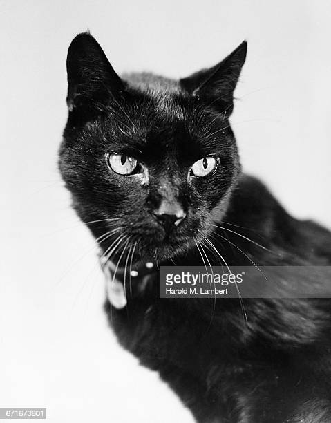 close-up view of black cat - pawed mammal stock pictures, royalty-free photos & images