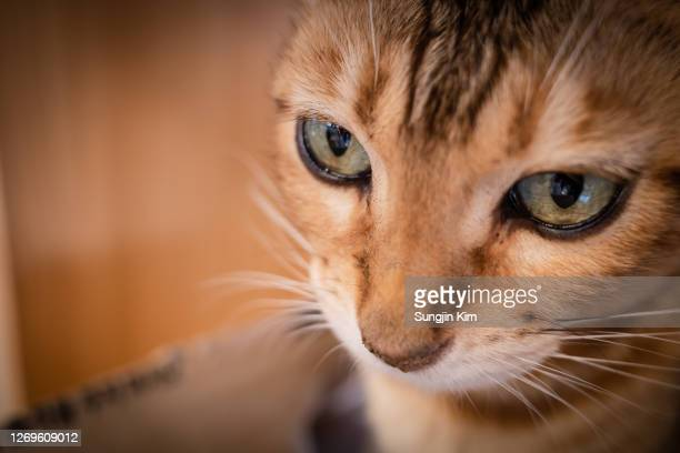 close-up view of cat - sungjin kim stock pictures, royalty-free photos & images
