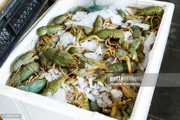 Close-up view of container with fresh shrimps in fish market
