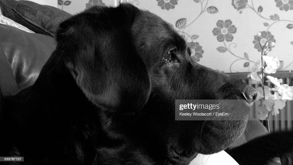 Close-Up View Of Dogs Head : Foto stock