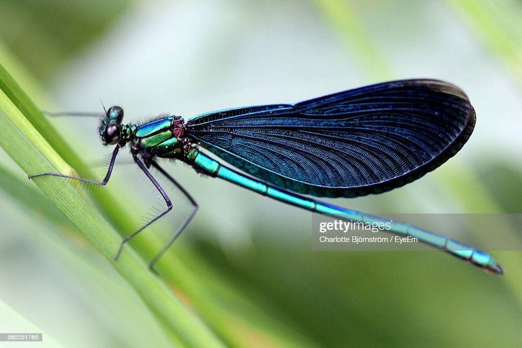 Close-Up View Of Dragonfly : Stock Photo