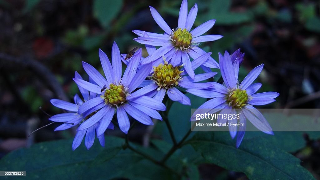 Close-Up View Of Flowers : Foto stock