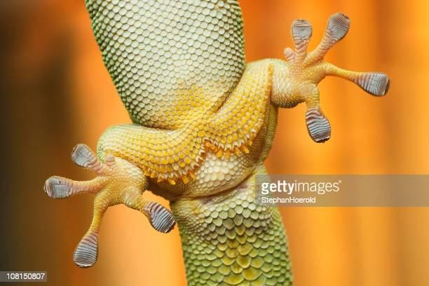 Close up view of gecko Füße clinging auf Glas