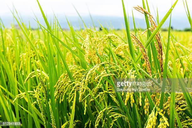 Close up view of grass
