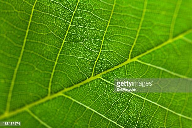 Closeup view of leaf surface with high resolution details