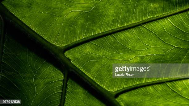 Close-up view of leaf veins